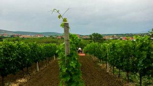 Eko Winery