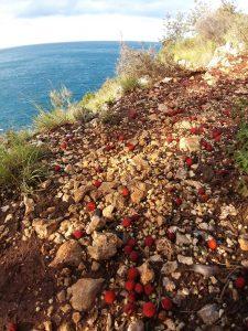 Shend Andreu Beach 5